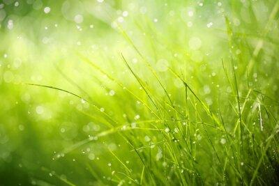 Canvas print Morning dew on spring grass