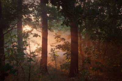 Canvas print morning fog in the forest