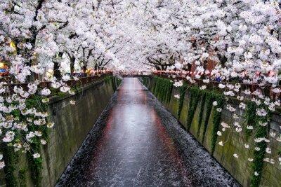 Canvas print Nakameguro Kanal in Tokio während der Kirschblüte im Frühling