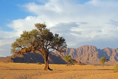 Namib desert landscape with rugged mountains and a thorn tree, Namibia.