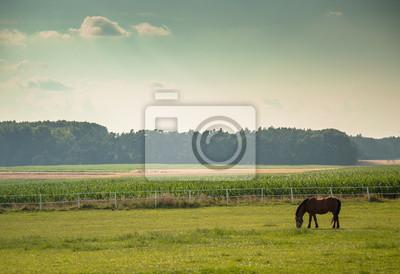 Noble dark horse standing on paddock during summer day sunset, evening landscape