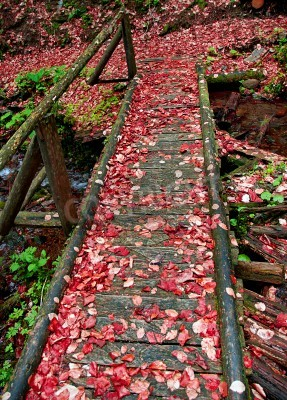 Old bridge in the forest in autumn with red fallen leaves