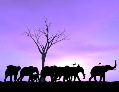 Canvas print One Elephant Leads The Way as the others follow with a purple sunset or sunrise.