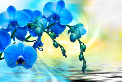 Canvas print Orchid flower close up