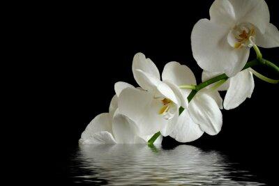 Canvas print orchid flower reflexion