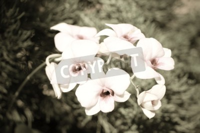 Canvas print Orchid Flower with Retro Effect
