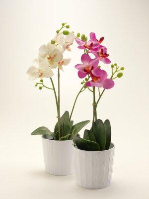 Canvas print Orchidea