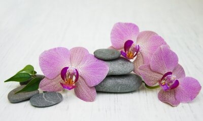 Canvas print Orchids and massage stones