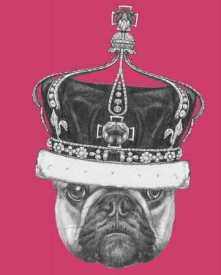 Canvas print Original drawing of French Bulldog with crown. Isolated on colored background