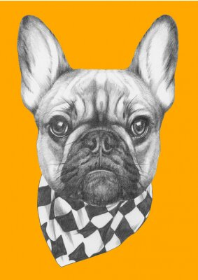 Canvas print Original drawing of French Bulldog with scarf. Isolated on colored background