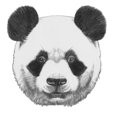 Canvas print Original drawing of Panda. Isolated on white background