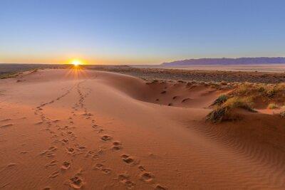 Canvas print Oryx tracks to sunset
