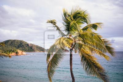 Palm Tree Blowing in Wind on Beach