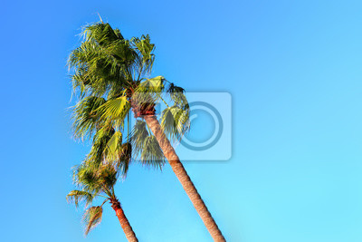 Palm Tree Blowing in Wind Tropical Storm Maui Hawaii. Copy space