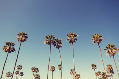 Canvas print Palm Trees in Retro Style
