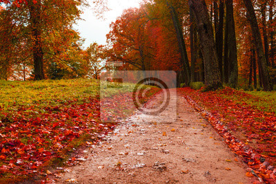 Park in autumn with red fallen leaves - autumn colored landscape