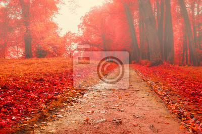 Park in autumn with red fallen leaves - autumn foggy colored landscape
