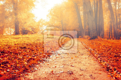 Park in autumn with red fallen leaves - autumn misty colored landscape