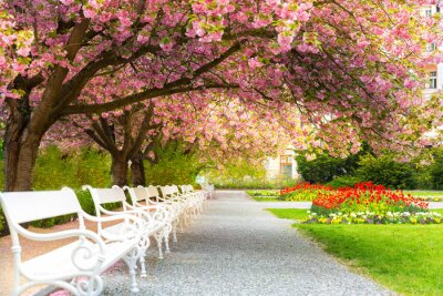 Canvas print Park with blossom sakura, flower lawn and benches