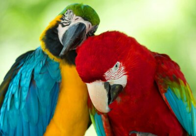 Canvas print parrots