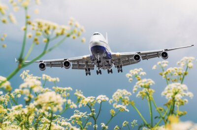 Canvas print Passenger commercial airplane flies over flower fields at the airport.
