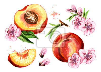 Peaches fruits and flowers set. Watercolor hand drawn illustration, isolated on white background