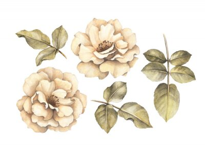 Canvas print Pencil drawing of roses