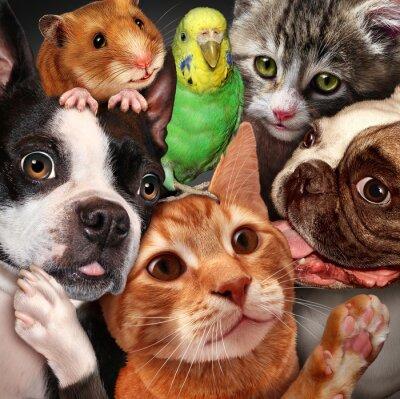 Canvas print Pet Group