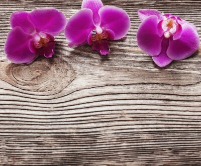 Canvas print Pink orchid flowers on a wooden background