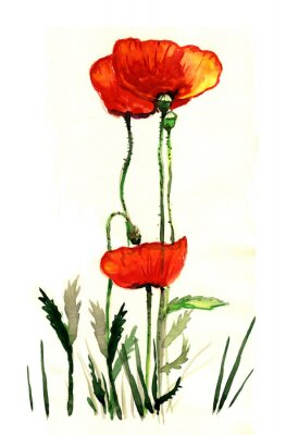 Canvas print poppies watercolor