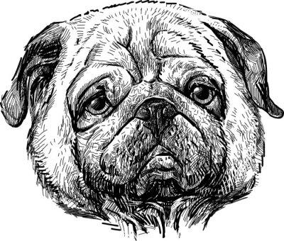 Canvas print portrait of the pug