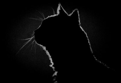 Canvas print Profile cat in the dark