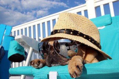 Canvas print Pug Relaxing in Beach Chair