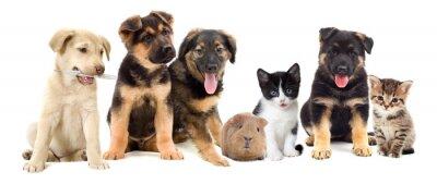 Canvas print puppies looks