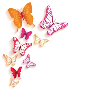 Canvas print Realistic Colorful Butterflies Isolated for Spring