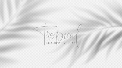 Canvas print Realistic transparent shadow from a leaf of a palm tree on the white background. Tropical leaves shadow. Mockup with palm leaves shadow. Vector illustration