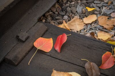 Red apple leaves on the wooden rails; Autumn mood; Fallen leaves as a symbol of autumn