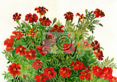 Red flowers Tagetes. Marigolds and butterfly. Bouquet. Watercolor painting