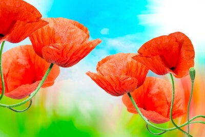 Canvas print Red poppy close up