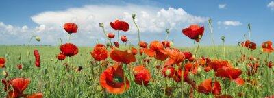Canvas print red poppy panorama
