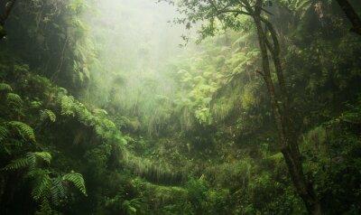 Canvas print Regenwald tropisch nass abenteuer