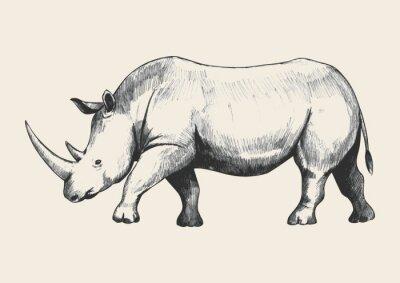 Canvas print Rhino Sketch