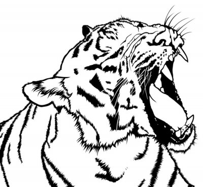 Canvas print Roaring Tiger - Black and White Drawing Illustration, Vector