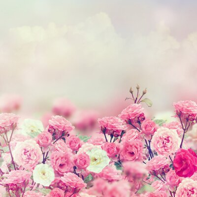 Canvas print Rose Flowers