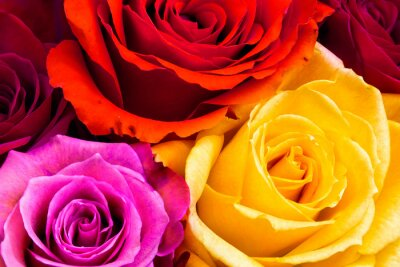 Canvas print Roses background