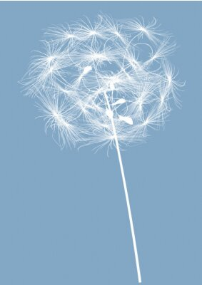 Canvas print round single dandelion white silhouette