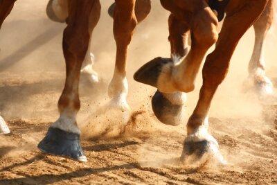 Canvas print Running Horses Hooves