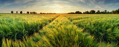 Canvas print Rural landscape with wheat field on sunset