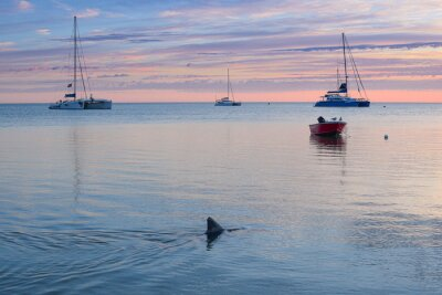 sailboat in the sea with a dolphin