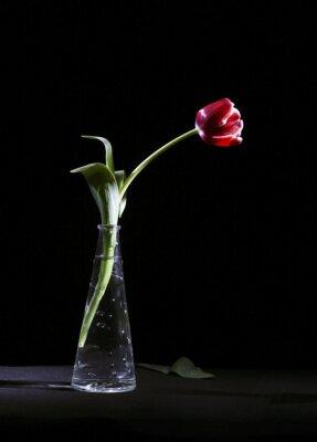 Canvas print Samotny tulipan